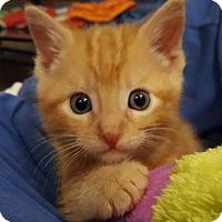 Adopt A Pet :: Oscar - Fenton, MO