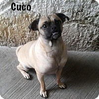 Adopt A Pet :: Cuco - Edmonton, AB