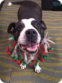 Terrier (Unknown Type, Medium) Mix Dog for adoption in Charlotte, North Carolina - LOLA