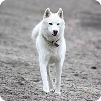 Adopt A Pet :: Mick - Santa Clarita, CA
