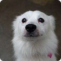 Adopt A Pet :: Penny - Pontiac, MI