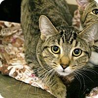 Adopt A Pet :: Andrea - Tempe, AZ