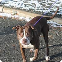Adopt A Pet :: Tool - Manahawkin, NJ