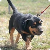 Adopt A Pet :: Short Stop - Henderson, KY