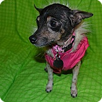 Adopt A Pet :: Tessa - Knoxville, TN
