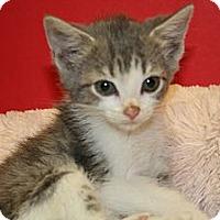 Adopt A Pet :: HEIDI - SILVER SPRING, MD