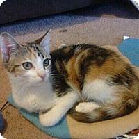 Adopt A Pet :: Morning Glory - Byron Center, MI