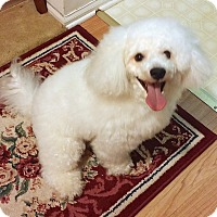 Adopt A Pet :: SNOW - East Hanover, NJ