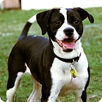 Adopt A Pet :: SUNDEA - North Augusta, SC