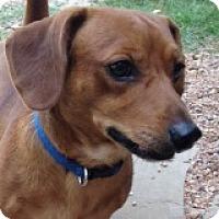 Adopt A Pet :: Barney Bigbend - Houston, TX