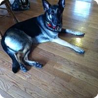 Adopt A Pet :: Julia - Baltimore, MD