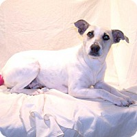 Adopt A Pet :: 16-d02-011 Angie - Fayetteville, TN