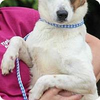 Adopt A Pet :: Marble - Munford, TN