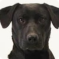 Adopt A Pet :: Khloe - Baltimore, MD