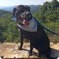 Adopt A Pet :: JoJo - Huntsville, AL