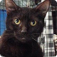 Adopt A Pet :: Cliff - Grants Pass, OR