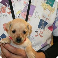 Adopt A Pet :: Bailey - Wildomar, CA