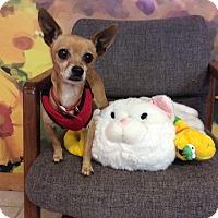 Adopt A Pet :: Buddy - Mechanicsburg, OH