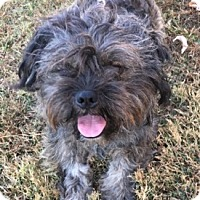 Adopt A Pet :: Toby - Mount Airy, NC