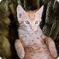Adopt A Pet :: AL - Newport Beach, CA