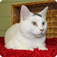 Adopt A Pet :: Snowflake - Cedar Rapids, IA