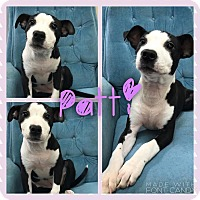 Adopt A Pet :: Patti - Garden City, MI