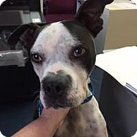 Adopt A Pet :: Haylie - Memphis, TN