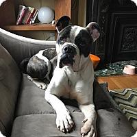 Adopt A Pet :: Valerie - St Louis, MO