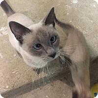 Adopt A Pet :: Uma - Austin, TX
