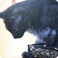 Adopt A Pet :: SOOT - Cleveland, TN