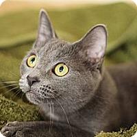 Adopt A Pet :: Uschi - Chicago, IL