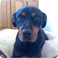 Adopt A Pet :: Wilma - Fresno, CA