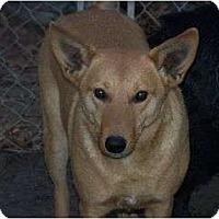 Adopt A Pet :: Sandy - Russellville, AR