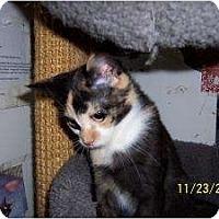 Adopt A Pet :: Ali - Island Park, NY