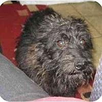 Adopt A Pet :: Heinzie - Antioch, IL