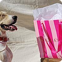 Adopt A Pet :: Layla - Harrodsburg, KY