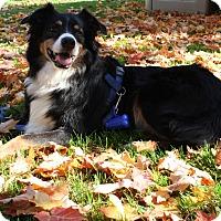Adopt A Pet :: Brody - Elk River, MN