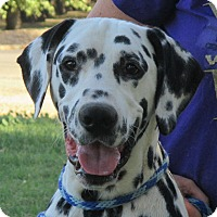 Adopt A Pet :: Monty - Turlock, CA