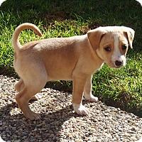 Adopt A Pet :: Cain - La Habra Heights, CA