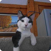 Adopt A Pet :: Orion - Richland, MI