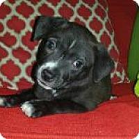 Adopt A Pet :: Becca - Marlton, NJ