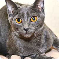 Adopt A Pet :: Fara - Davis, CA