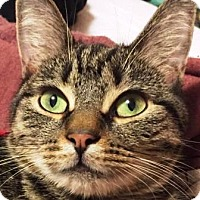 Adopt A Pet :: Della - Worcester, MA