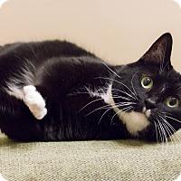 Adopt A Pet :: Roxy - Chicago, IL