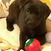 Adopt A Pet :: Droste - APPLICATIONS CLOSED - Livonia, MI