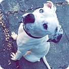 Adopt A Pet :: Zeus (COURTESY POST)
