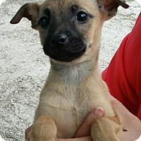 Adopt A Pet :: Eden - Gainesville, FL