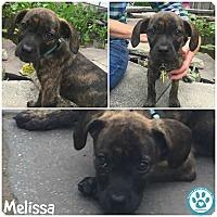 Adopt A Pet :: Melissa - Kimberton, PA