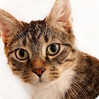 Adopt A Pet :: Peter - Chaska, MN