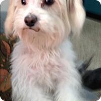 Adopt A Pet :: Ford - Thousand Oaks, CA